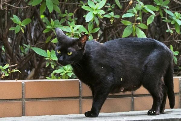 黒猫ちゃん 怪訝な表情