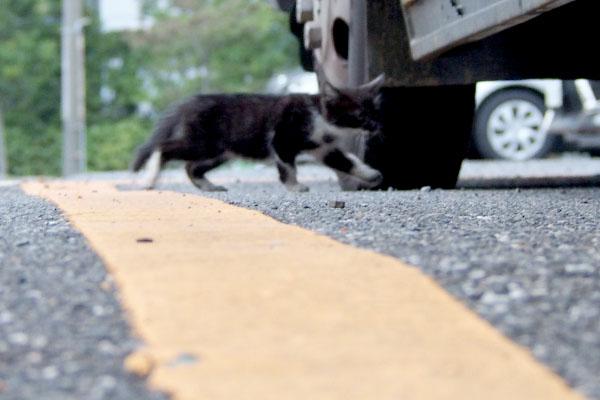 走るちっちゃい猫