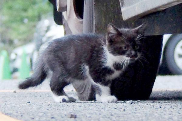うろちょろちっちゃい猫
