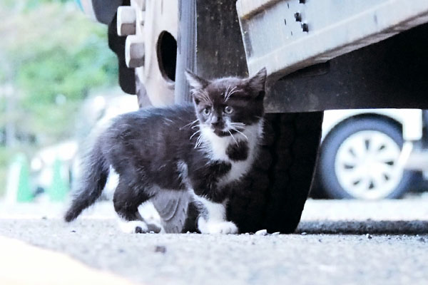 kitten in miton place