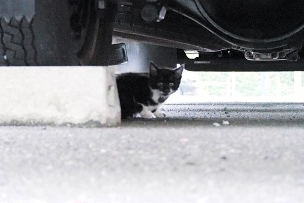 覗くちっちゃい猫