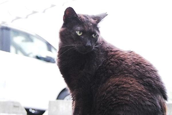 ミトン 仔猫を見てる
