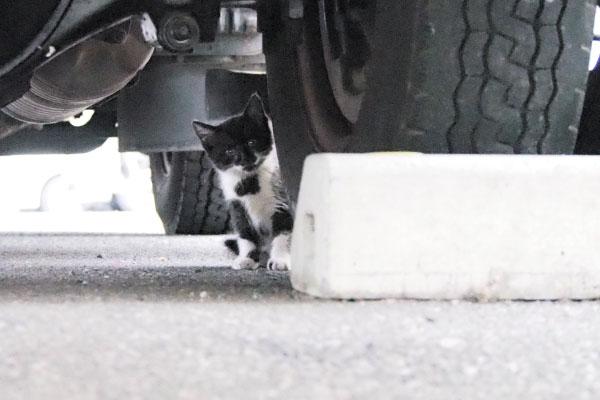 移動してまた覗くちっちゃい猫