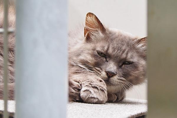 マフ 寝起きの顔