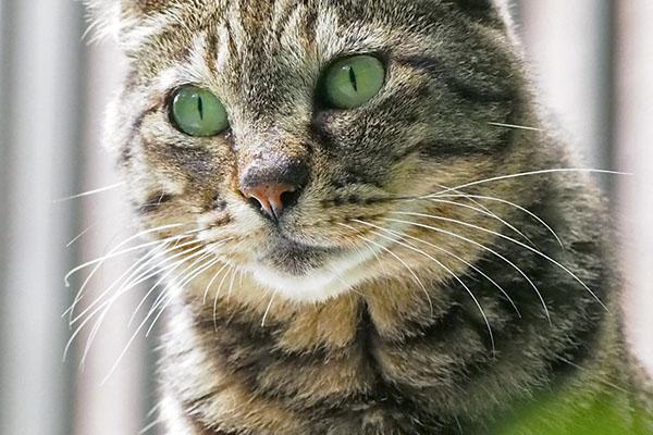 リュウリュウ 緑色の目