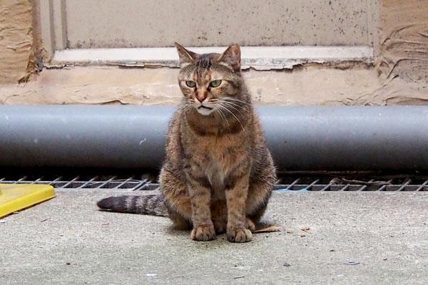 あき 母猫みたいな目