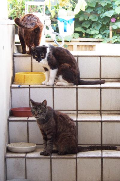 時に見掛ける階段レストランで待つ猫ず