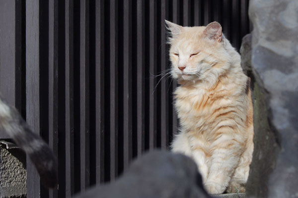 オトワのしっぽを見ているナリコ