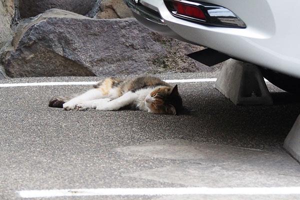 オトワ 隣りマンション駐車場 熟睡