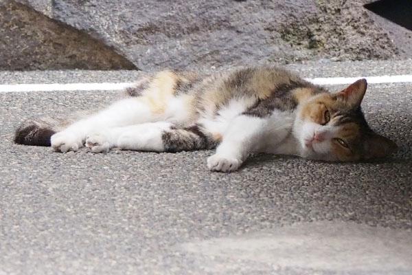 オトワ 眠い