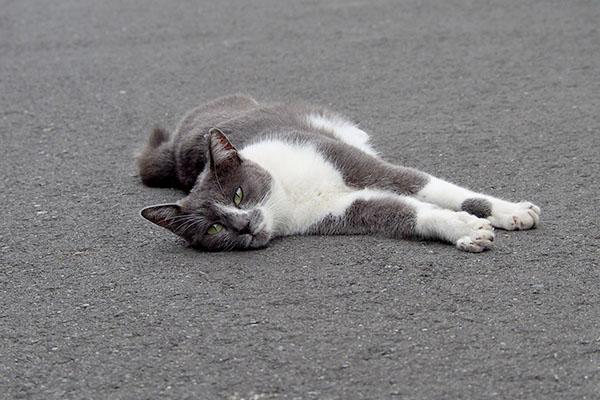 ちびにゃん 横になって見てる