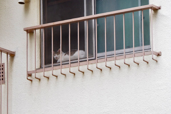 家猫さんを発見