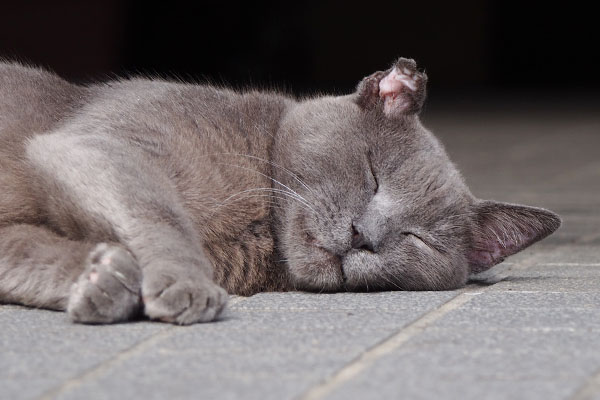 roshigurekun sleeping face