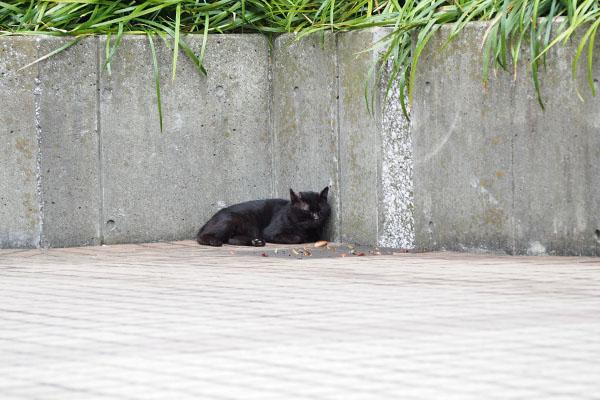 黒猫君 隅っこに