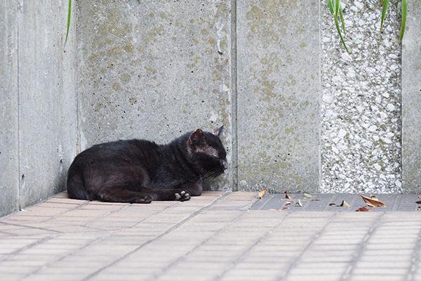 黒猫君 具合がよろしくない