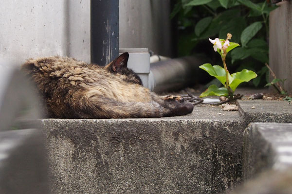 サビチッチ塀の上で寝ていた