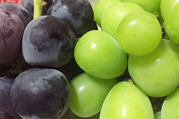 grape Pione and mascut