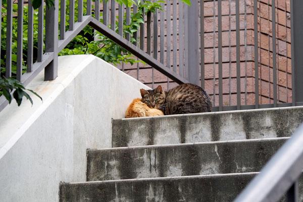 階段上にコダを枕にしているリュウリュウ