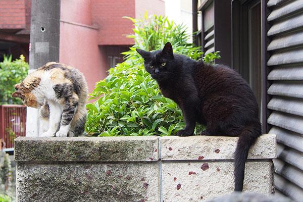 アカシとオトワ