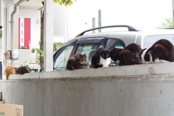 塀全体に6猫居る
