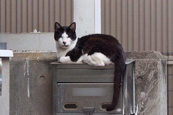 Teruma on the mailbox