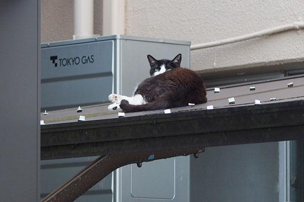 マシューはお向かいの屋根の上