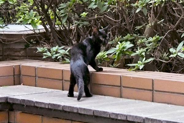 黒仔猫 たっち