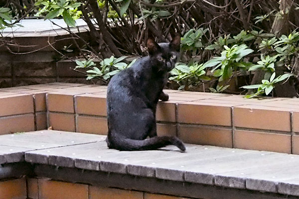 黒仔猫 振り返る