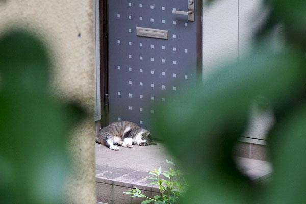 雫 ドア前で熟睡