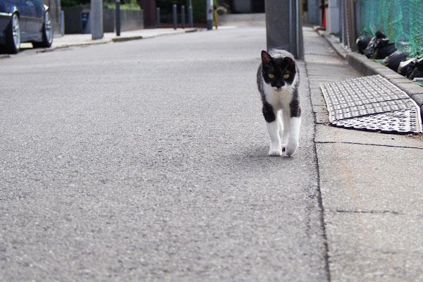 コテ 道路の端を歩く
