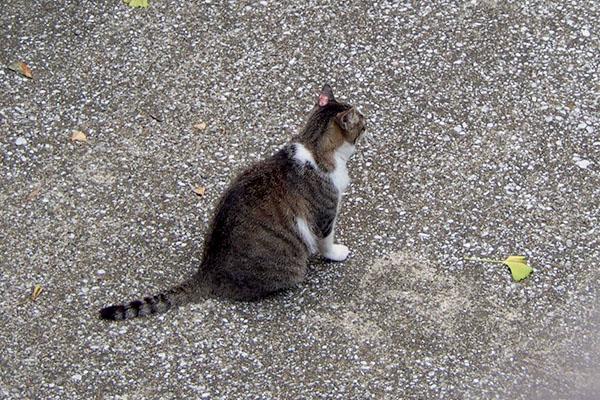 雫 出てきて猫ボラさんを待つ