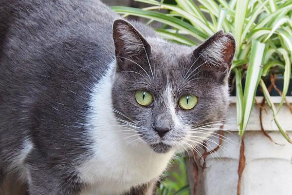 chibi green eyes