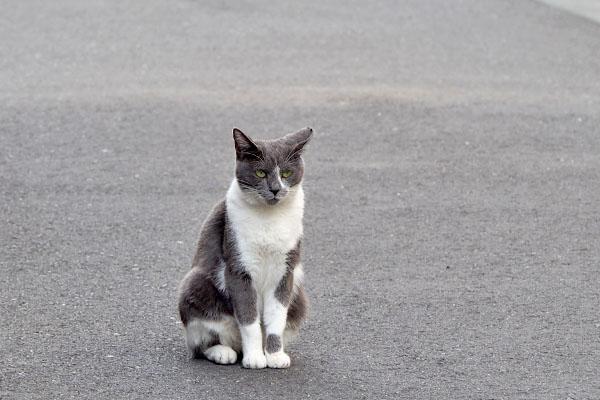 ちびにゃん 道路の真ん中でイカ耳