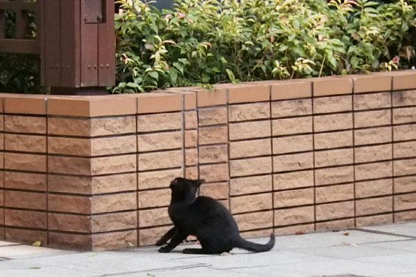 黒仔猫 ジャンプ前遠