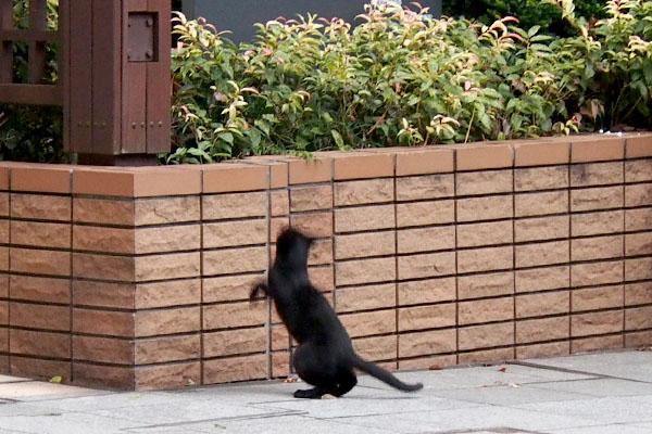 黒仔猫 ジャンプ中遠