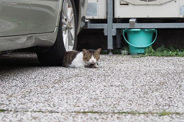 車の下にレオ太