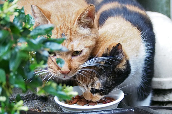 kabu and riko eating