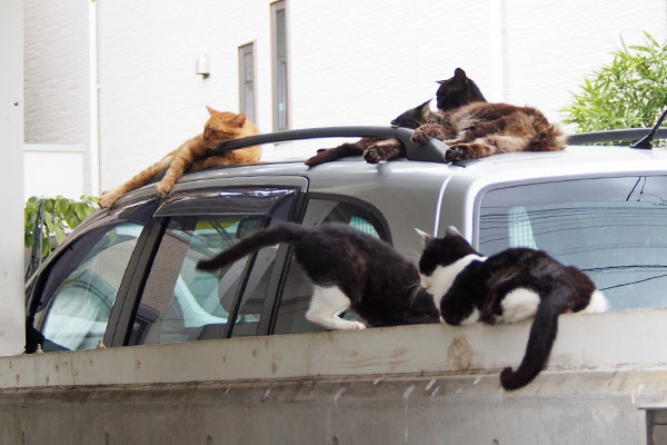 conpay_5cats