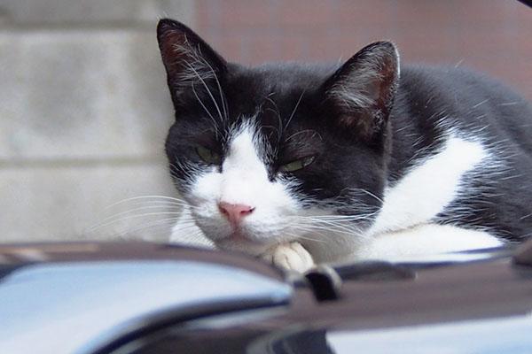 suzu face closeup at roof of car