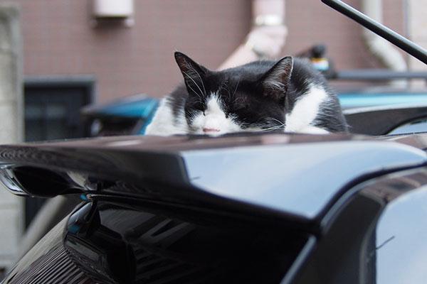 スズ 車の上で寝てしまった