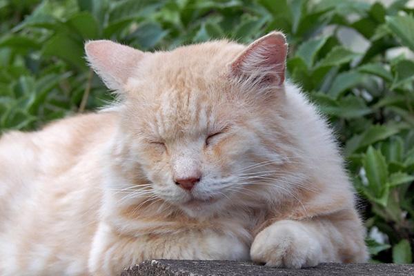 narikoma sleeping face