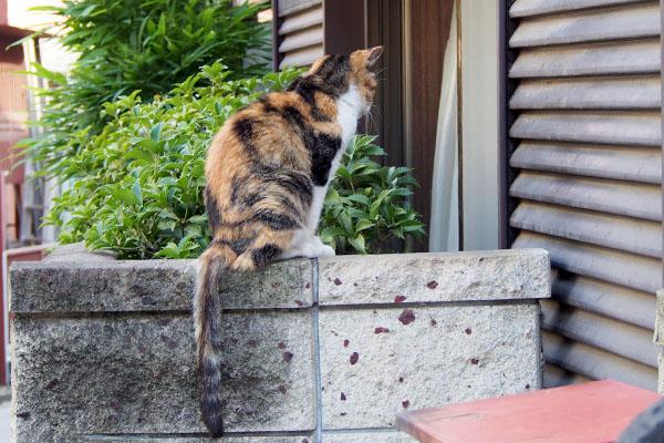 オトワ 塀の上から見つめる