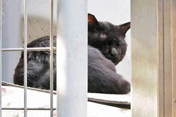 ファー君 マフの場所に黒猫