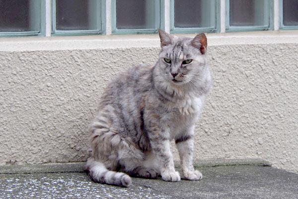 他の猫を見る銀