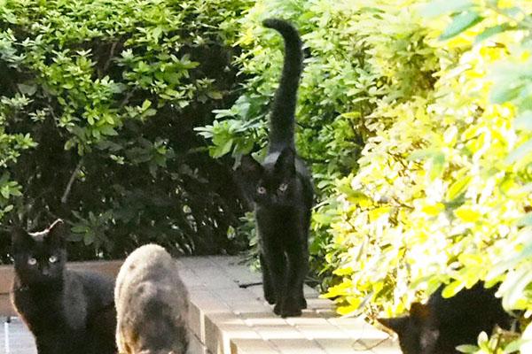 One of bk kitten has long tail