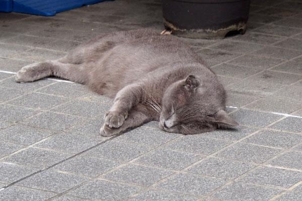 熟睡のロシグ