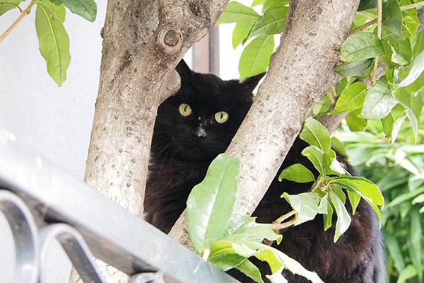 木の間にハリマ