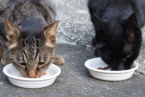 アカシと並んで食べるタビサンク