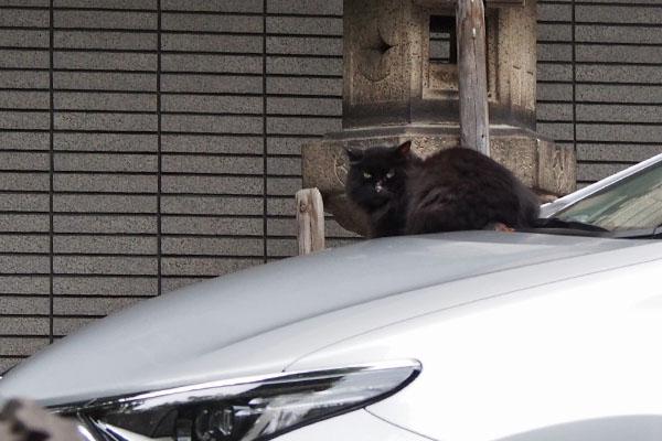 車の上のハリマ