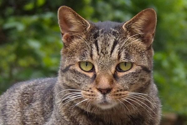 tabisanq face closeup